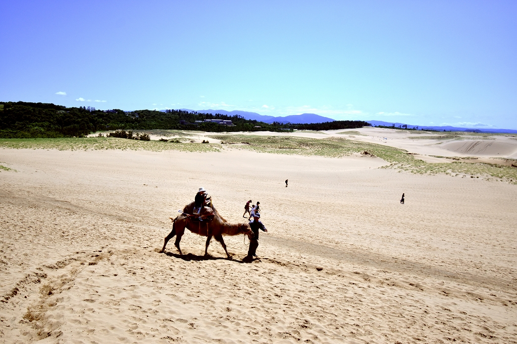 鳥取砂丘とても良かった7