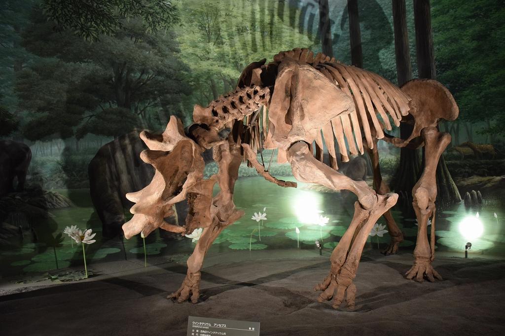 大迫力で大満足の福井県立恐竜博物館