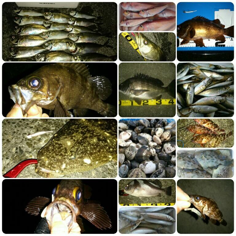 2016年の釣りを振り返る! ~全118釣行の軌跡~