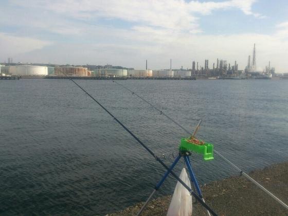 根岸港でサビキ釣り!