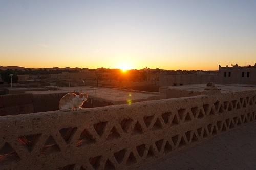 ハシラビード~サハラ砂漠 (4)