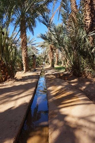 ハシラビード~サハラ砂漠 (13)