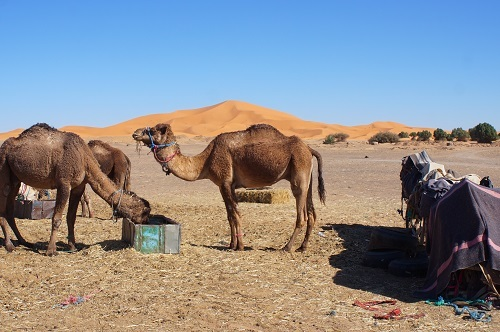 ハシラビード~サハラ砂漠 (16)