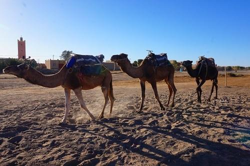 サハラ砂漠20171120 (1)