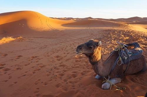 サハラ砂漠20171120 (86)