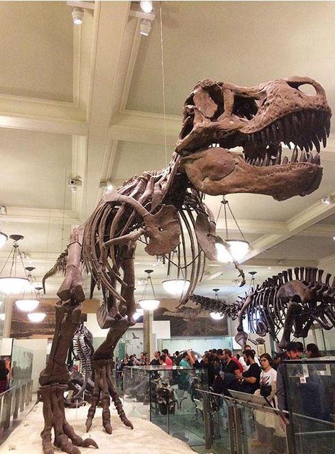 自然史博物館4階1