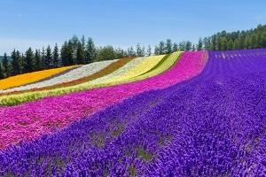 北海道富良野
