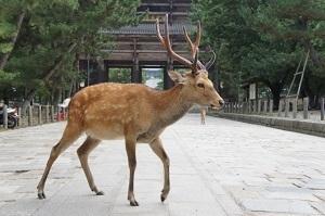 奈良県の有名なもの1