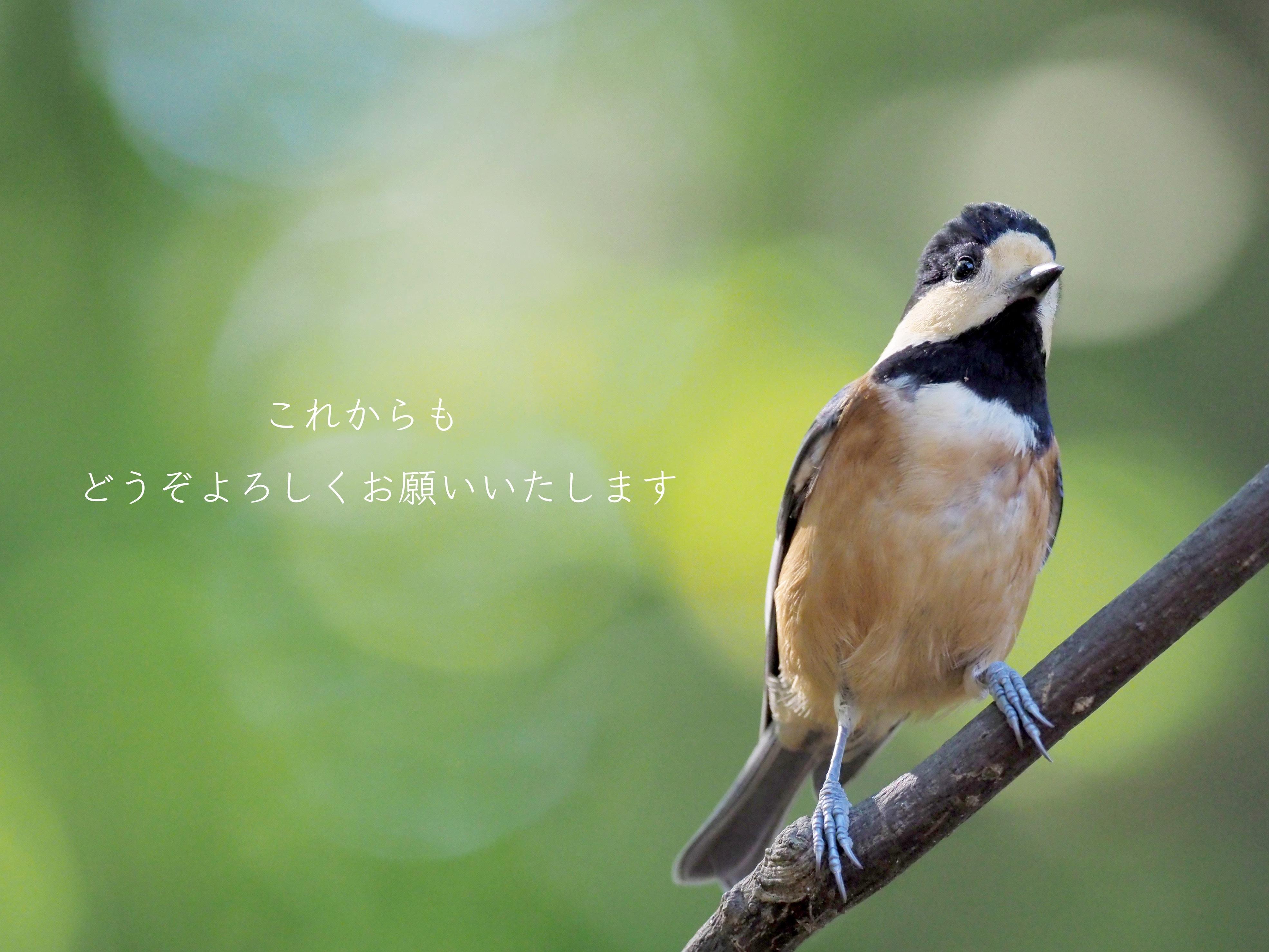 yamagara111th_.jpg