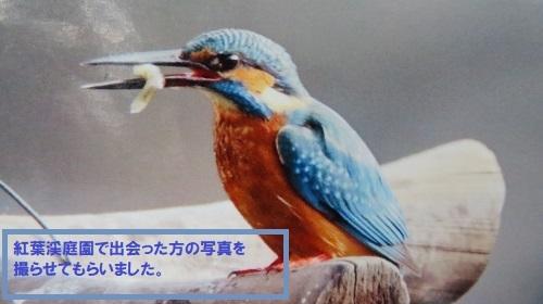 2017 10 27 カワセミ