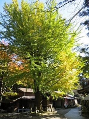 2017 11 13 西国33ケ所巡り 第十二番札所 岩間寺 さん