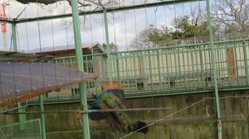 2017 1 16 (月) お城の動物園