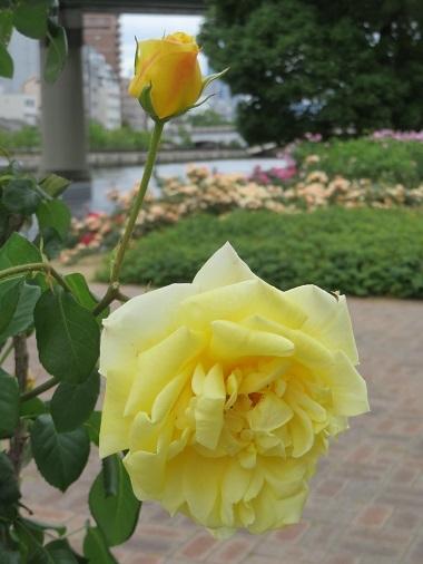 2018 4 24 鬼怒川温泉 花の宿 松やさん 朝ごはん