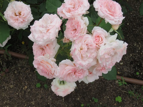 2018 4 24 鬼怒川温泉 花の宿 松やさん 女将さん