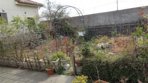 2017 1 19  みっちゃんの庭