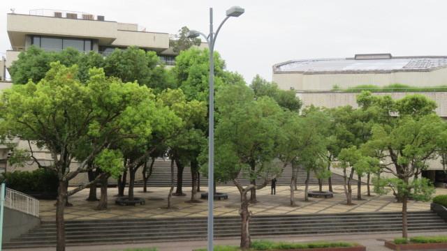 2018 5 5 マロニエの並木道