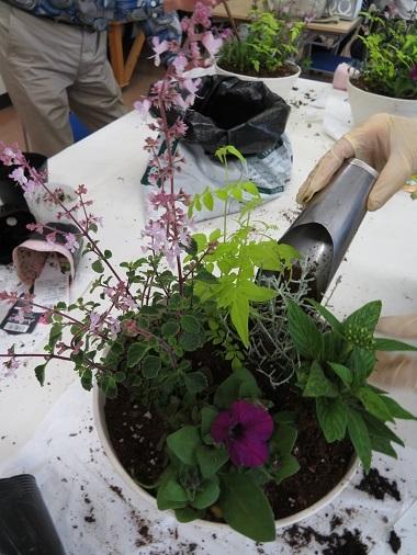 2018 5 31 緑花センター(寄せ植え体験)