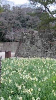 2017 3 1 お城(水仙)
