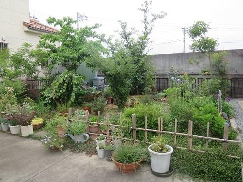 2018 6 15 みっちゃんの庭