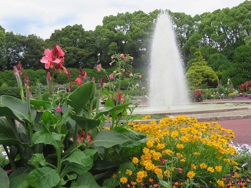 2019 6 18 京都府立植物園