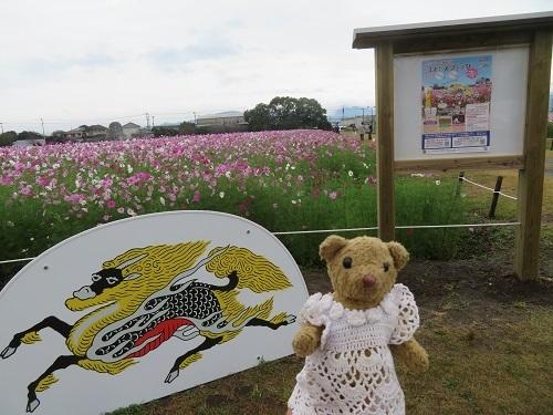 2019 10 18  秋桜(キリンビール福岡工場) &べぁー