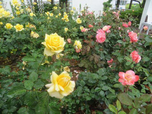 2019 12 11 伊藤公記念公園