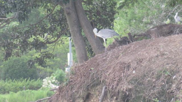 2017 7 24 滝原温泉 ほたるの湯