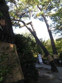 2018 11 10 紅葉渓庭園