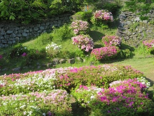 2017 9 26 みっちゃんの庭