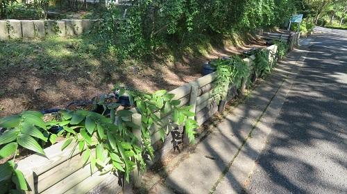 2017 9 29 緑花センター