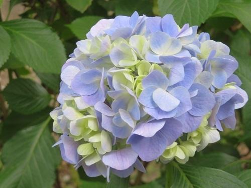 2017 10 7 休暇村 紀州加太さん  (夕御飯)