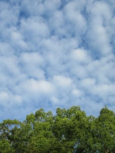 2020 10 7 朝の雲