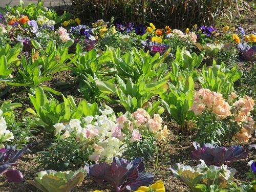 2020 11 18 公園の花壇