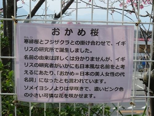 2019 3 12 亀山八幡宮