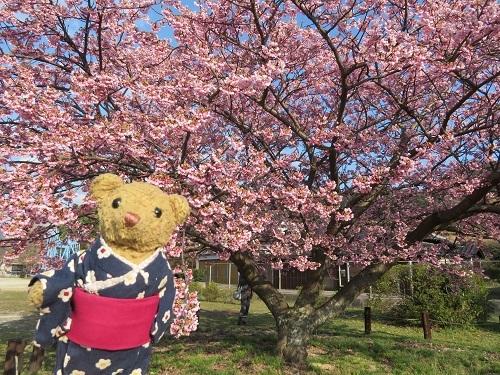 2019 3 12 天然記念物 蓬莱桜&べぁー