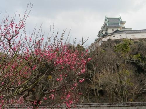 2018 1 27 お城(紅梅)
