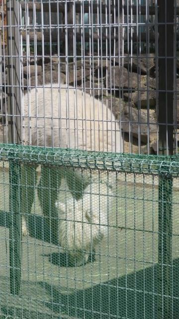 2021 3 17 お城の動物園