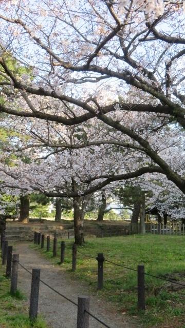 2021 3 25 お城'(桜)
