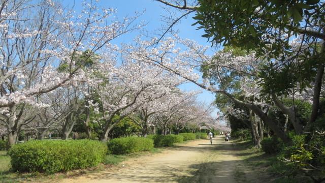 2018 2 25 お城(紅葉渓庭園)&オシドリ