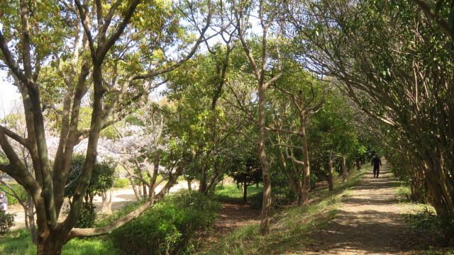 2021 3 27 河西公園(遊歩道)
