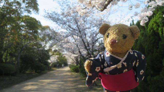 2021 3 27 河西公園(桜)&ベァー