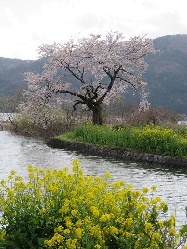 2019 4 15 琵琶湖一周日帰りツァー余呉湖