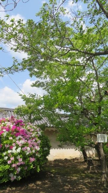 2019 4 21 天空の庭・高見の郷