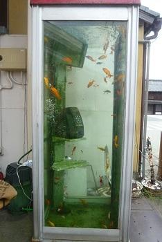 2016 819 大和郡山 金魚ボックス