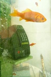 016 819 大和郡山 金魚ボックス